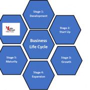 Life Cycle 1